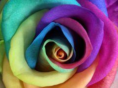 Immagine profilo di alshainblu
